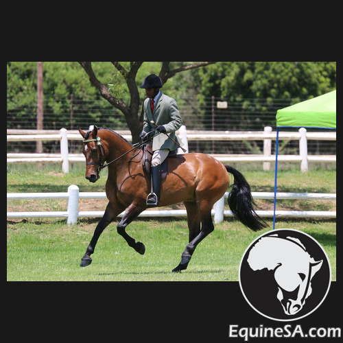 Full-time Exercise & Schooling Rider Required