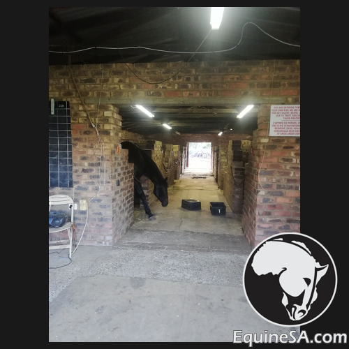 4 Open Stables Available